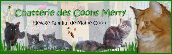 Chatterie des Coons Merry